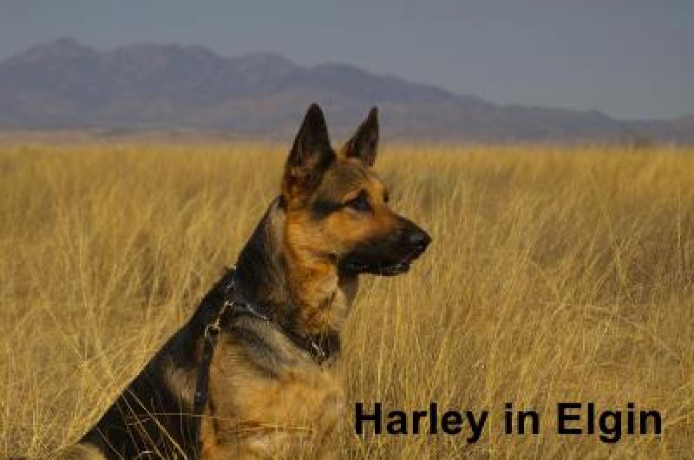 Save 15% On Duoxo Seborrhea Dog & Cat Shampoo (16.9 oz ...Oily Seborrhea In Dogs