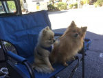 Seresto Flea Amp Tick Collar For Small Dogs Entirelypets