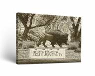 North Dakota State Bison Sketch Canvas Wall Art